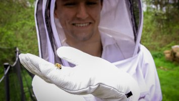 Boy in bee suit holds a honey bee.
