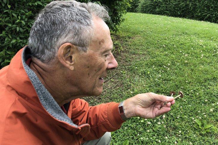 Maynard wheeler examines a mushroom